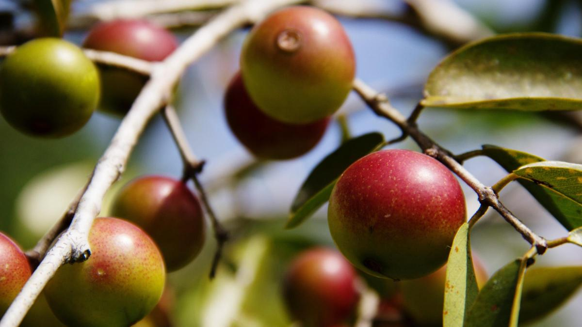 Superfood Spotlight: Camu Camu